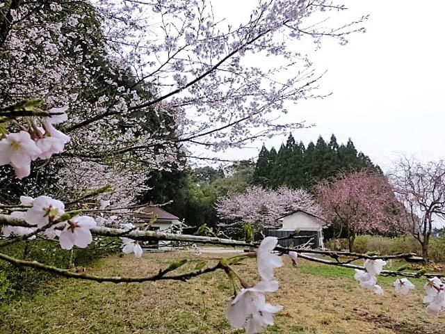 Pet graveyard landscape