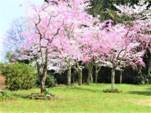 Pet cemetery-Tree funeral