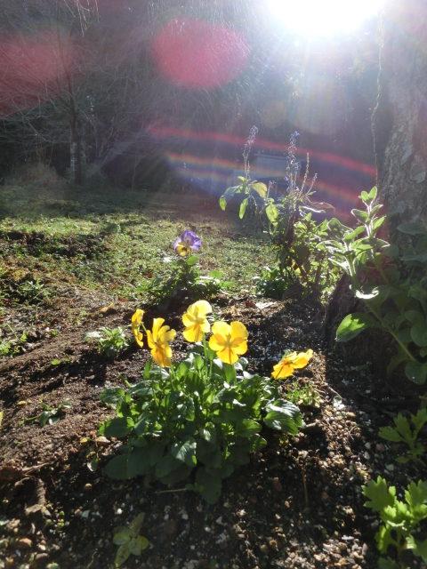 ペット用樹木葬の花壇
